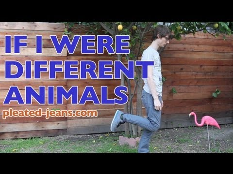 If I Were Different Animals