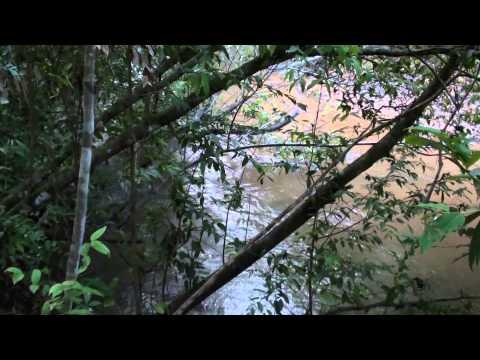 Sons da natureza, Relaxamento, Som de animais, O canto do jaó, O rio corre para o mar,