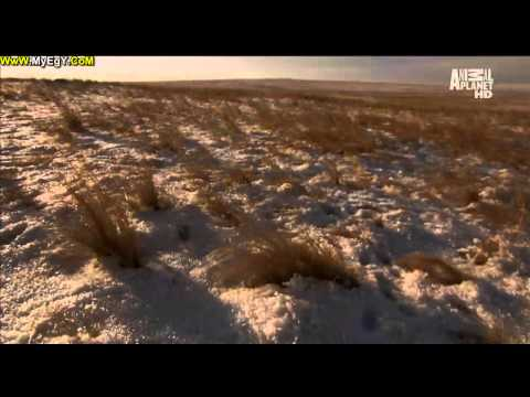   |       3  Animal Planet Wild Russia HD