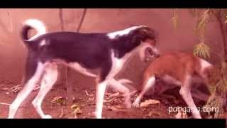 [Dog Chase - a better love story than twilight?] Video