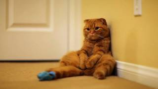 Un dia en la vida de un gato