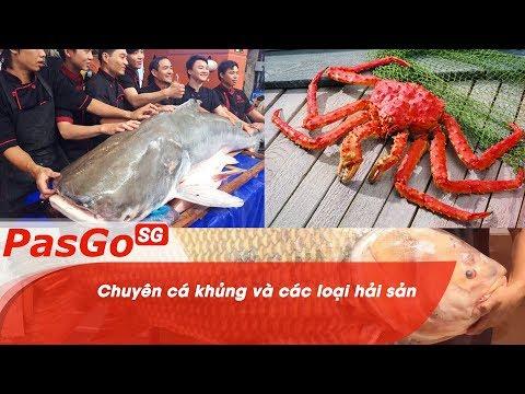 Chuyên cá khủng và các loại hải sản