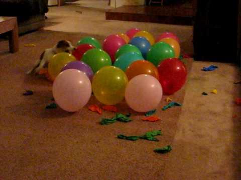 Pas kog ne treba pozivati na žurke :)