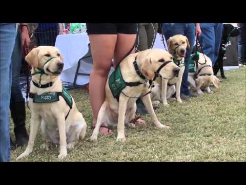 """CocoPups"" volunteers raise Guide Dogs in Flagstaff"