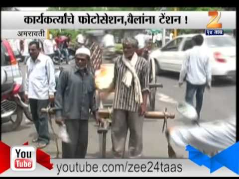 Zee24Taas | Navneet rana bulluck cart andolan