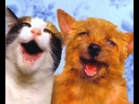 Chó và mèo hát