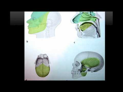 Trigemino parte1  Logia de la Facultad de Odontologia - Large.m4v