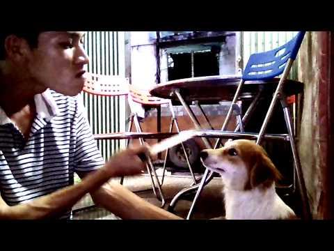 Thanh Niên Cứng Dậy Chó