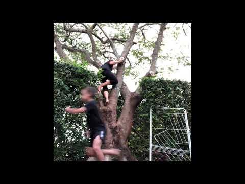 Stinky Monkey Chasing Dakota & Kye (SKIT)