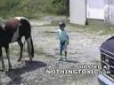 Patada Por Un Caballo