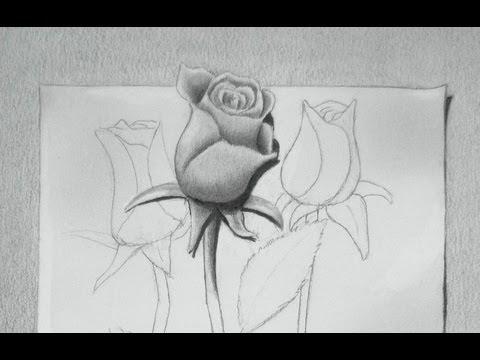 Rosas dibujo a lapiz 3D - Imagui