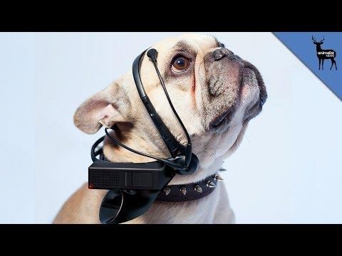 Dog Translator of The Future,