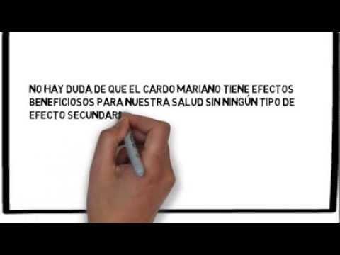 Cardo Mariano y sus beneficios