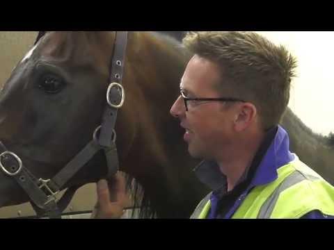 Horses at the Lufthansa Cargo Animal Lounge (EN)