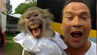 Monkey and Guy Screaming FUNNY !!! :)