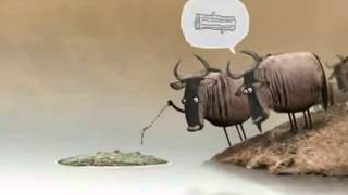 [cow discussion in funny cartoon] Video
