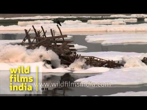 Polluted Yamuna River flowing in Delhi