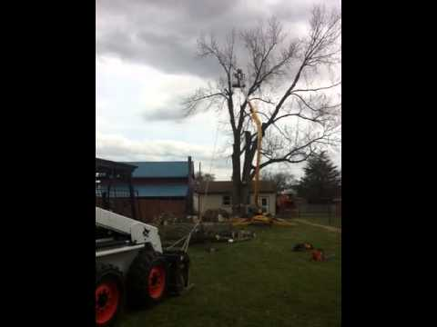 Smith tree service doing speed line #2
