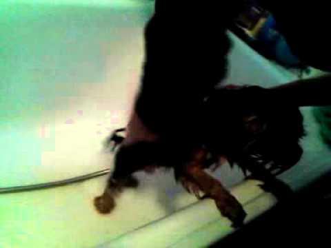 Kuče uživa u kupanju
