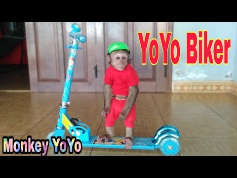 Monkey Baby Yoyo drives a Scooter |Baby Monkey Funny to play