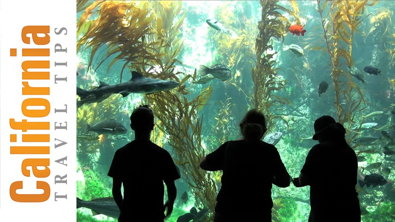 Birch Aquarium La Jolla San Diego Attractions Youtube