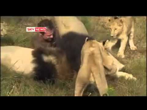 amazing lion man in south africa