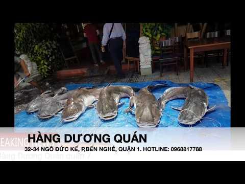 """Cá Lăng, Cá Chiên """"khủng"""" gần 100kg tại Hàng Dương Quán"""
