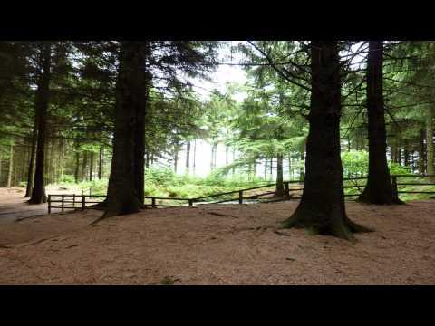 Beacon Fell Country Park Longridge Lancashire