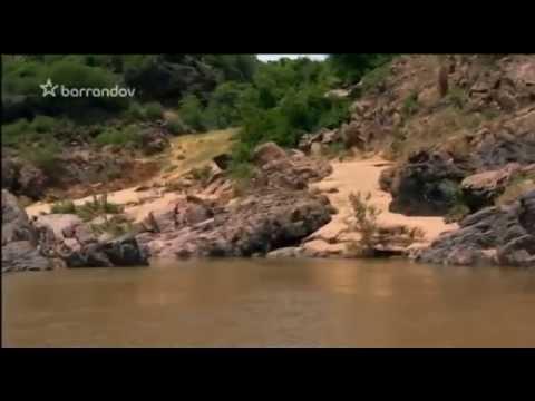 Nebezpe�n� stretnutia - Krokod�ly v ohrozen�