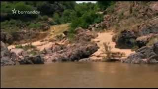 Nebezpečné stretnutia - Krokodíly v ohrození
