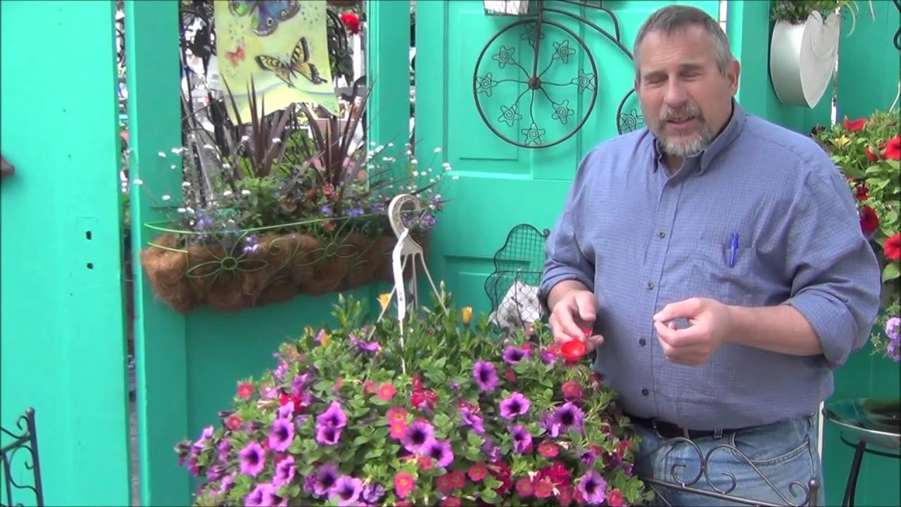 Youtube Hanging Flower Baskets : Hanging basket care by the plant farm