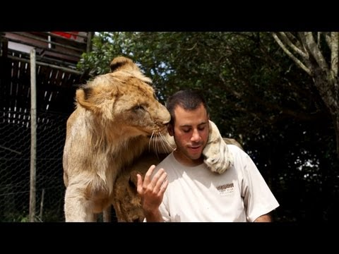 Getting morning love from the lions