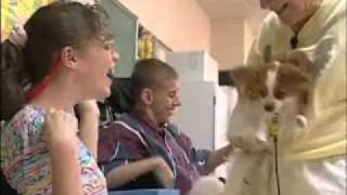 Therapy Dogs International Informational Video