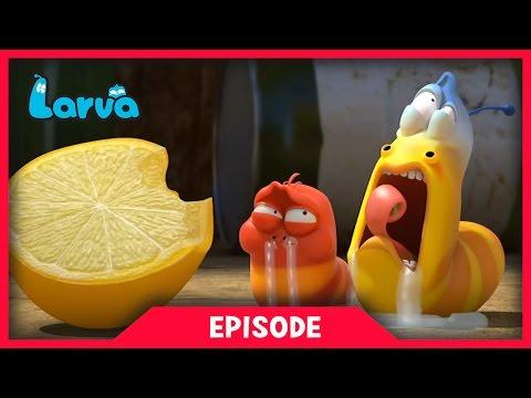 Larva - Citrón