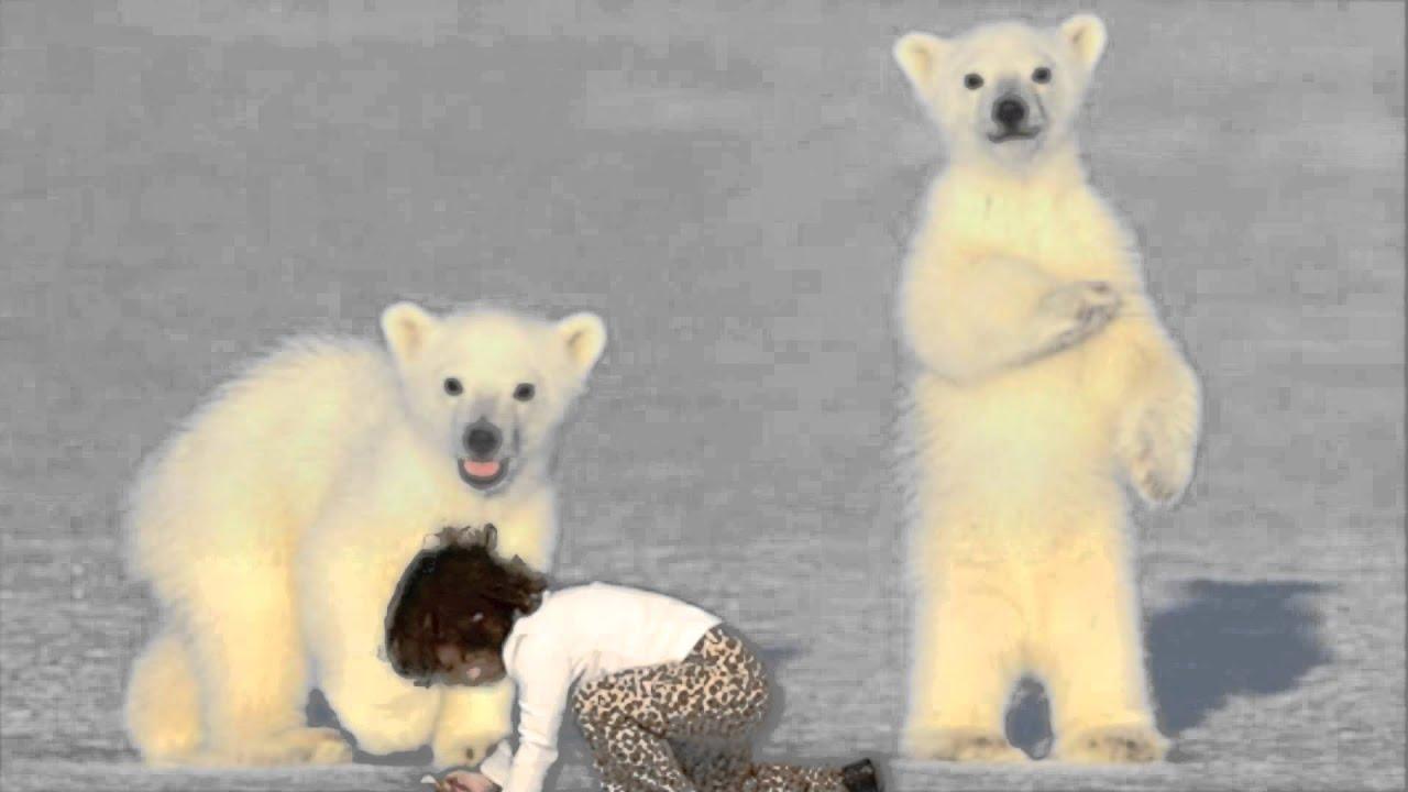 melissa with polar bear cubs in antarctica - YouTube
