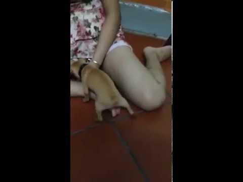 Choáng với chú chó tự sướng cho cô chủ