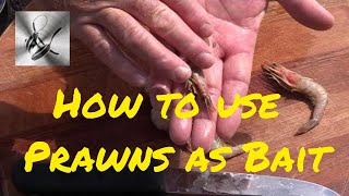 How to use Prawns as bait
