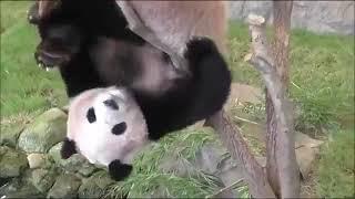 Caídas de pandas