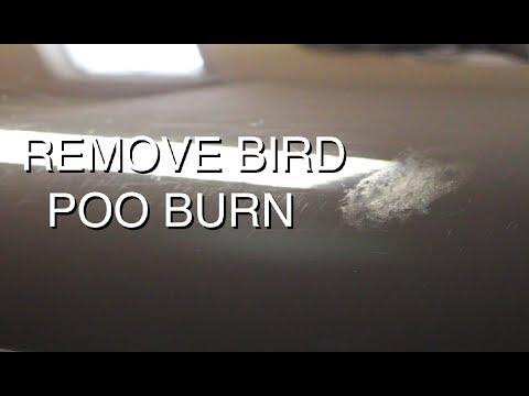bird droppings. Black Bedroom Furniture Sets. Home Design Ideas