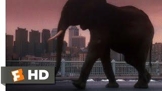 12 Monkeys (10/10) Movie CLIP Zoo Animals Run Free (1995