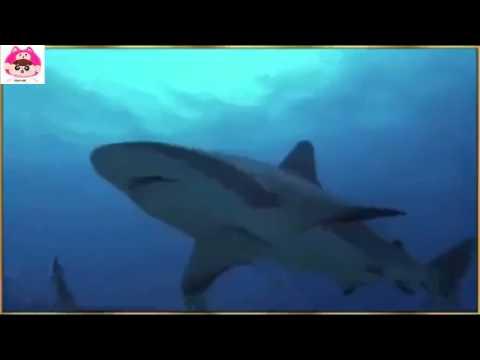Cá heo giúp chú chó thoát khỏi hàm cá mập - Clip ý nghĩa