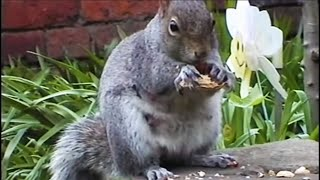 Clever Critters: How Do Squirrels Find Food
