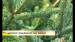Christmas Celebration:Street for Christmas Tree sale in Dubai