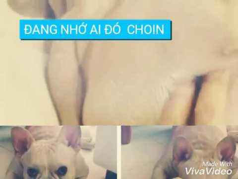 Những hình  ảnh về chú chó CHOIN của KELVIN KHÁNH