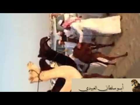 مسيرة مضيمه للمالك محمد بن رقيب الفهري