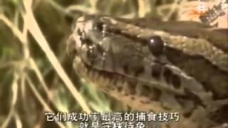 アナコンダの解剖シーン