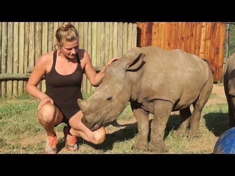 Cute Baby Rhinos