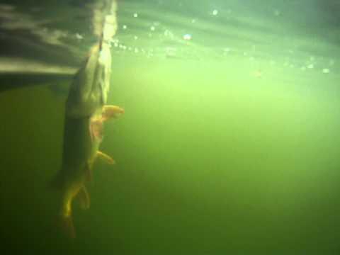 Fishing report - GOPR0086 Video