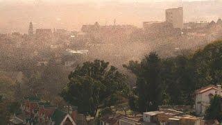 Locust Plague Descends On Madagascan Capital