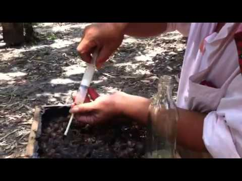 无针蜂(银蜂)繁殖场
